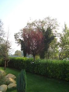 A garden outside Hotel Le Ginestre