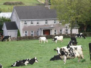 Pet or pets staying with guests at Fairylands Country House