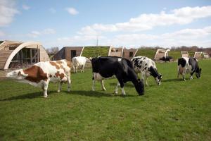 Haustiere von Gästen der Unterkunft Koe in de Kost