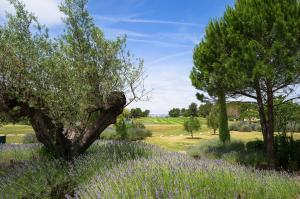 A garden outside Maeva Particuliers Résidence Pont Royal en Provence