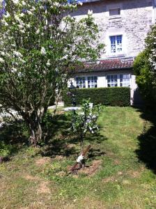 A garden outside Les Lilas Roses