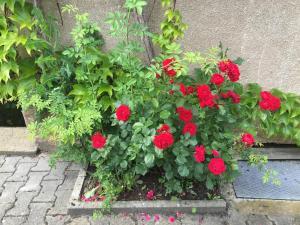 Ein Garten an der Unterkunft Apartment Gosberg - 90qm