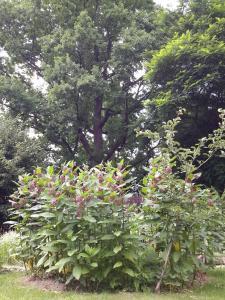 Ogród w obiekcie Pensjonat Leśny Dworek