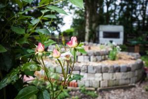 Een tuin van Herberg De Helleborus