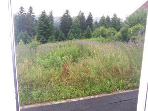 Ein Garten an der Unterkunft Ferienhaus Waldfee