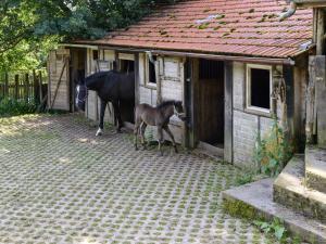 Haustiere von Gästen der Unterkunft Forsthaus Halbemark