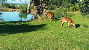 A garden outside Plettenberg Bay Game Reserve: The Baroness Safari Lodge