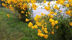 Ogród w obiekcie Gościniec Nad Stawem