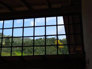 A view of the garden at Gallito de las Rocas Guest House or nearby