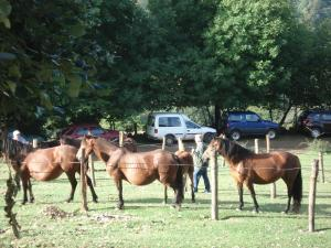 Animals at the hostel or nearby