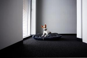 Pet or pets staying with guests at Alt Hotel Winnipeg