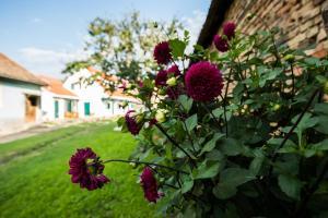 O grădină în afara Cloasterf Haus