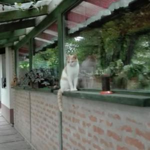 Animal ou animaux domestique(s) séjournant avec des clients dans l'établissement Farm stay Lackovic