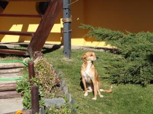 Huéspedes con una o varias mascotas en Cabañas Marias del Sur