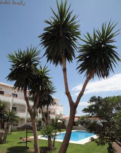 Het zwembad bij of vlak bij Hotel Tarik
