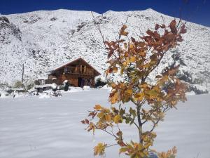 La Araucaria during the winter