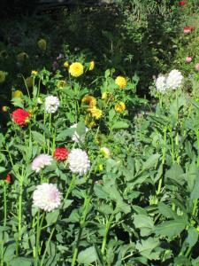 Ein Garten an der Unterkunft Gasthaus Kreuz