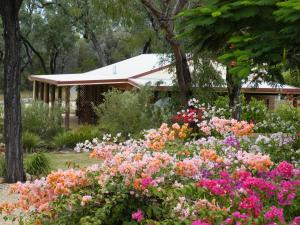 A garden outside Rubyvale Motel & Holiday Units