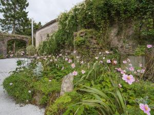 A garden outside Ballyboy House