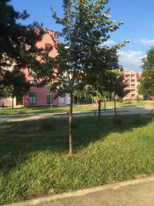 Vrt ispred objekta Top Apartment