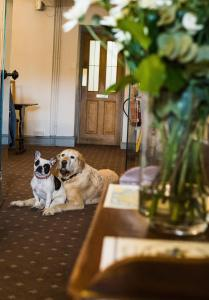 Pet or pets staying with guests at The West House