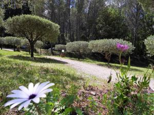 A garden outside Le Mas des Oliviers