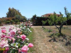 A garden outside Bed and breakfast Le Camelie