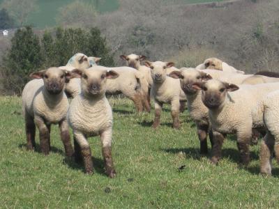 Smallicombe Farm - Laterooms