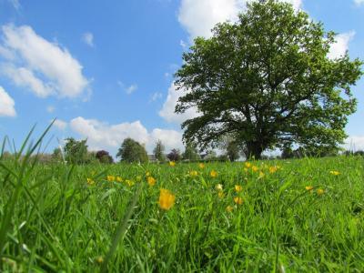 Lowe Farm - Laterooms