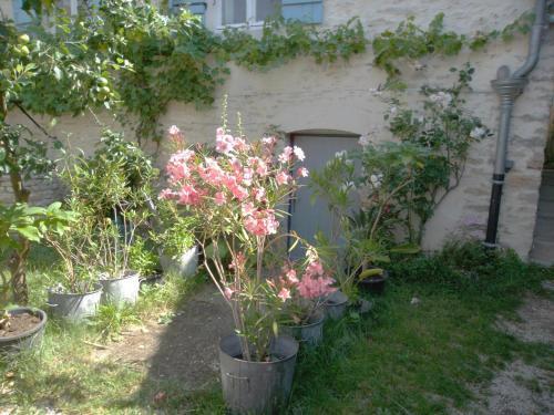 A garden outside Les Trois Croix
