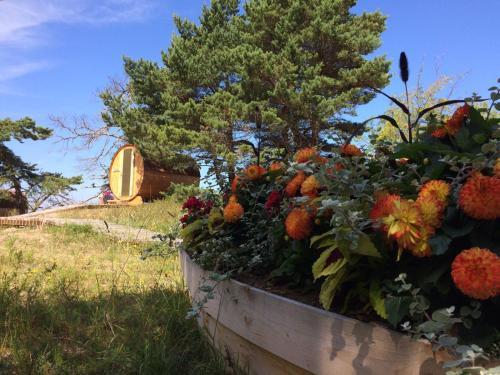 A garden outside Saulesmājas
