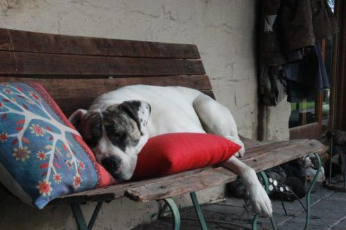 Pet or pets staying with guests at Avoca Park