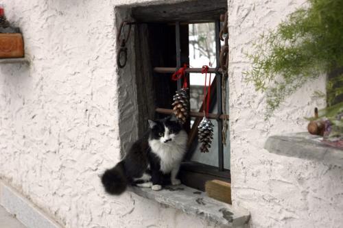 Ospiti di Maison Cassius con animali domestici