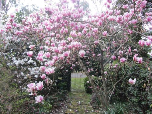 A garden outside Bellawongarah at Berry