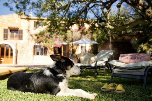 Mascotas con sus dueños en Bou Ros Finca Can Veritat