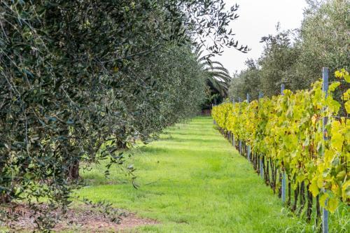 Giardino di Agriturismo Villa Isa