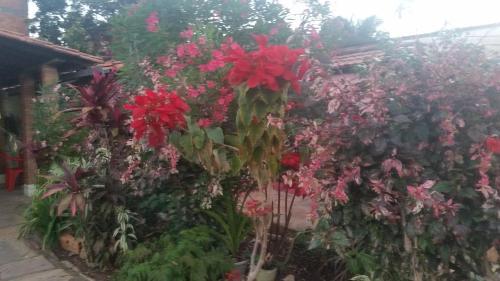 Jardín al aire libre en Casa da Dona Ilda