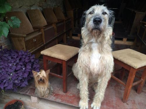 Domáce zviera alebo zvieratá hostí v ubytovaní Mníchov dvor