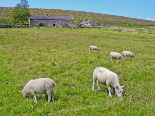 Shawside Farm