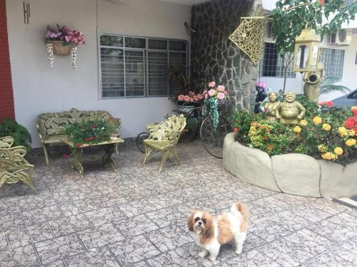 Pet or pets staying with guests at Pousada Castelinho