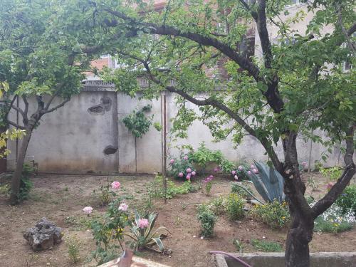 A garden outside Hostel Mana Kutaisi
