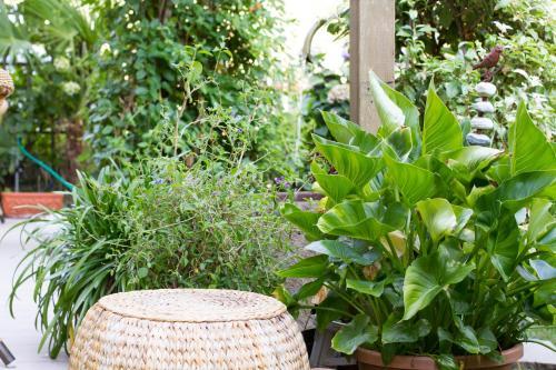 Ein Garten an der Unterkunft Pension Lafod