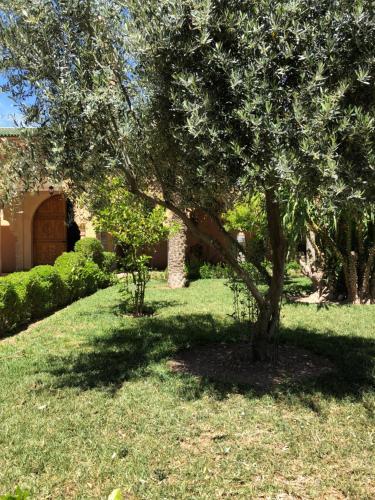 A garden outside Palmier fleuri