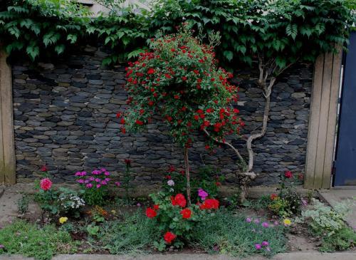 A garden outside Green Guest House