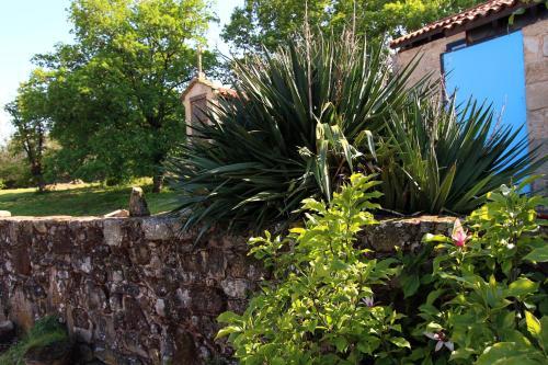 A garden outside Casa dos Paus