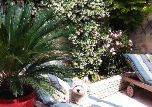 Pet or pets staying with guests at B&B Maison Gaudin