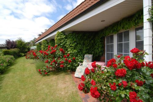 Ein Garten an der Unterkunft Hotel Albatros