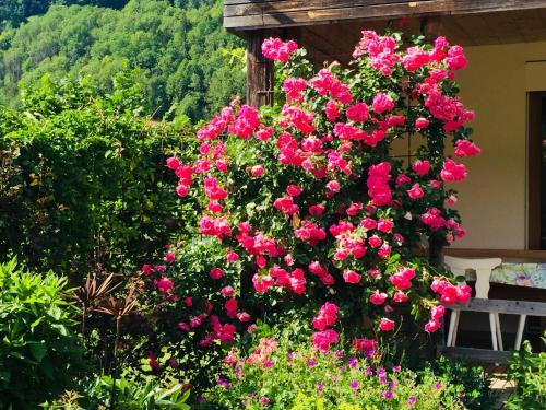 Ein Garten an der Unterkunft Ferienwohnung Dünser