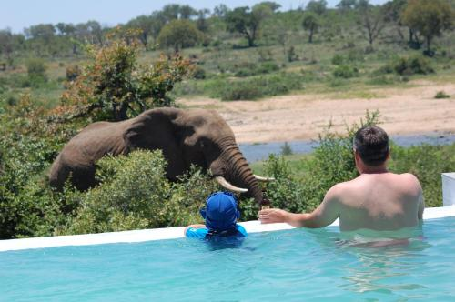 The swimming pool at or close to Tamboti River Lodge
