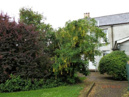 A garden outside Crannagael House